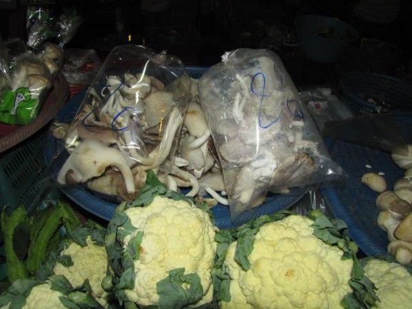 Грибы в Таиланде устричная вешенка