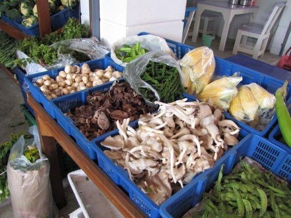 грибы в таиланде соломенные грибы вешенки устричные грибы