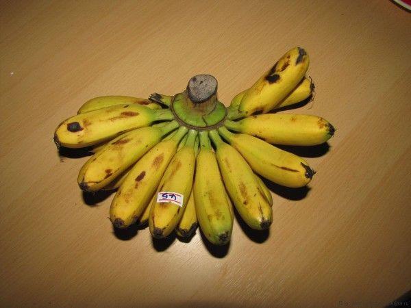 Тайские бананы Дамские пальчики (Lady fingers)