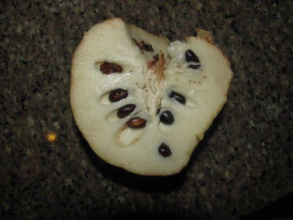 нойна в разрезе нойна кремовое яблоко custurd apple