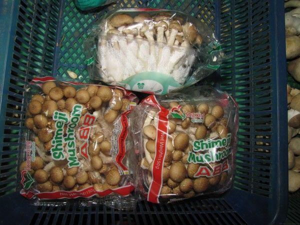 Грибы шимеджи грибы в таиланде