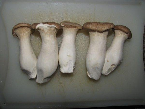 грибы еринги грибы в таиланде