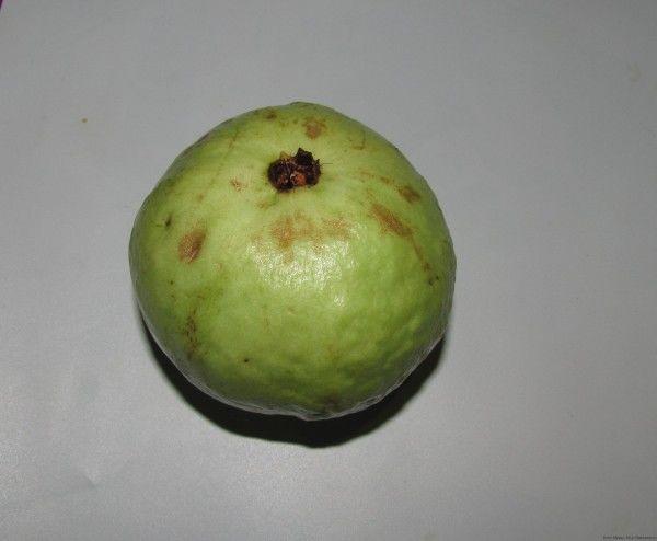 плод гуавы guava