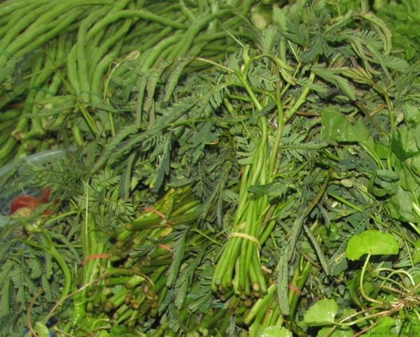 тайские травы в тайской кухне водяная мимоза