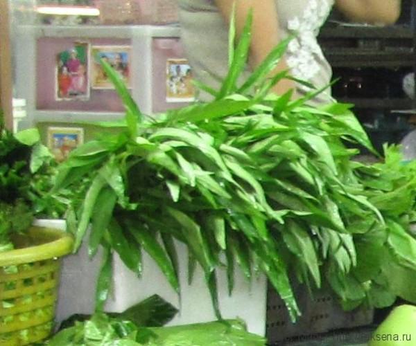тайские травы в тайской кухне водяной шпинат