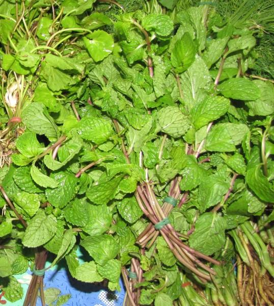 тайская мята тайские травы