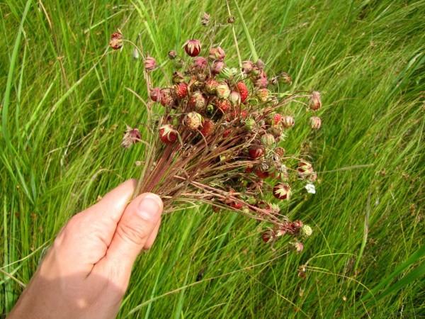 варенье из клубники полевая клубника загадки про ягоды