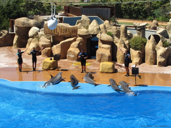 Шоу дельфинов аквапарк Маринеленд каталония испания