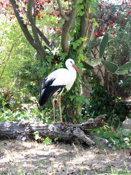 мини-зоопарк аквапарк маринеленд каталония испания