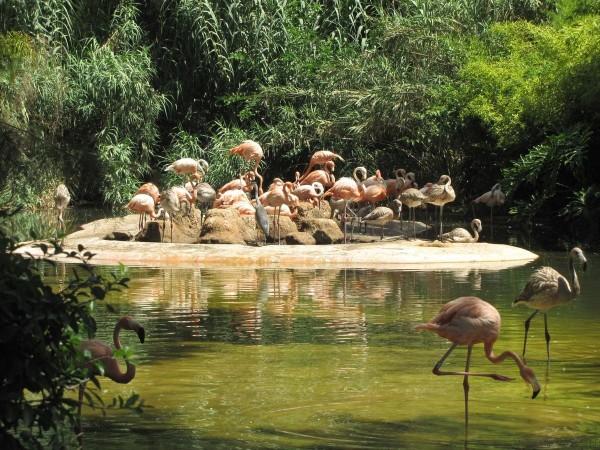 фламинго зоопарк барселоны