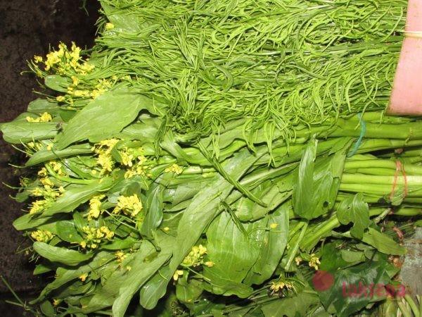 травы в тайской кухне