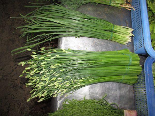 тайские травы в тайской кухне луковые цветы