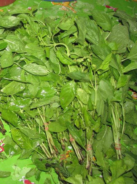 тайские травы в тайской кухне священный базилик