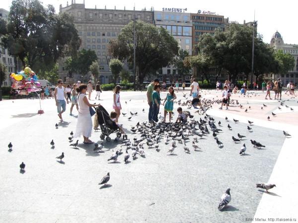 голуби на площадь Каталонии в барселоне