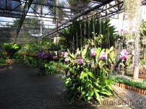 нонг нуч сад орхидей