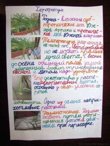проект по окружающему миру 1 класс Комнатные растения