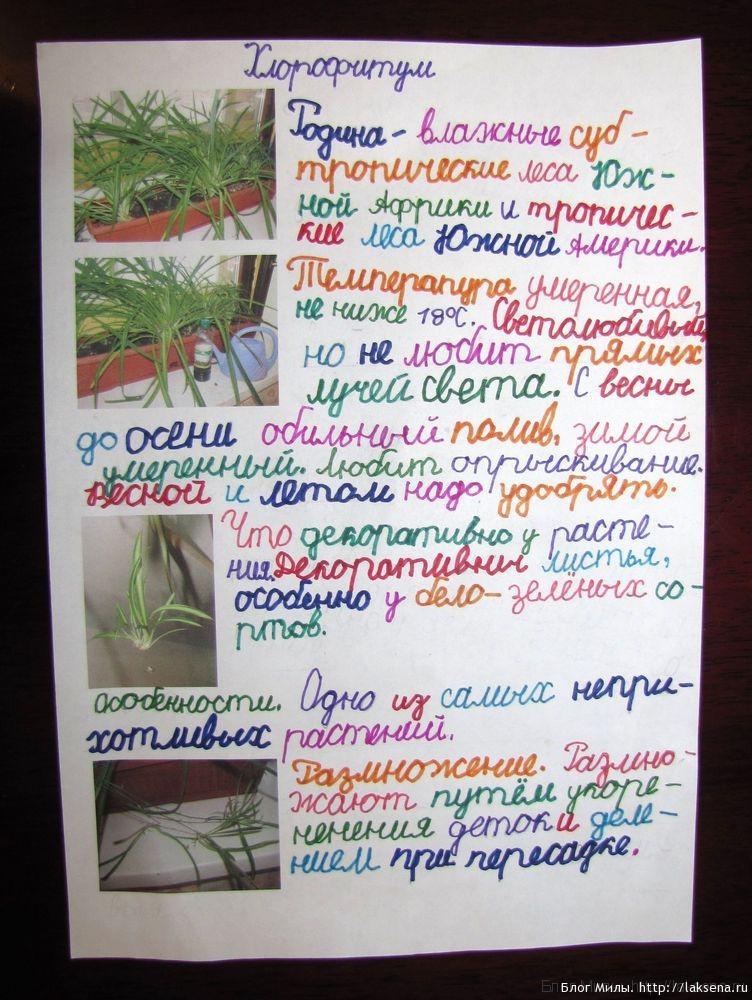 Реферат на тему мир растений 1421