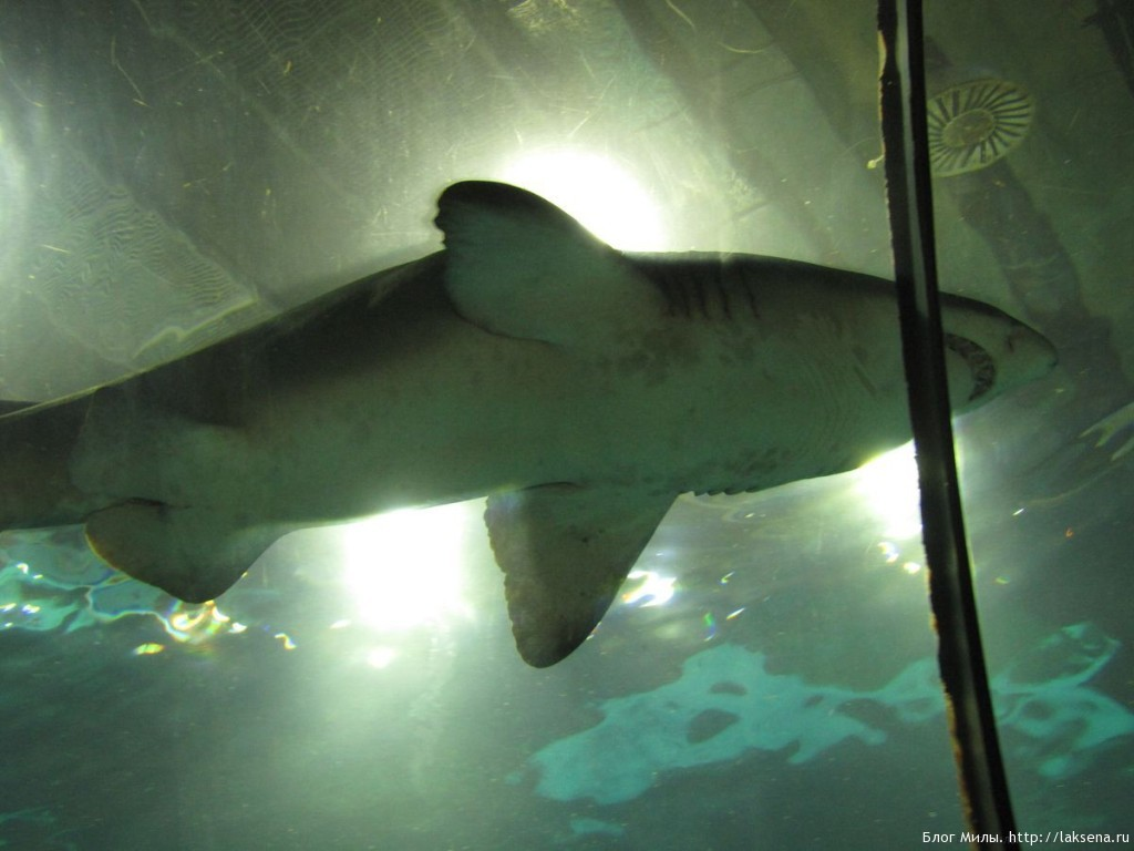 океанариум барселоны отзыв фото сообщение про рыб