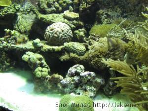 океанариум барселоны отзыв фото