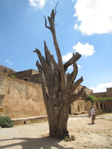 оливковое дерево монастырь аркади