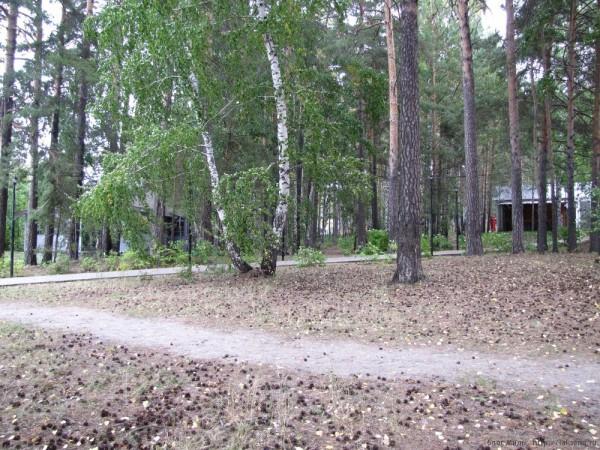 Сценарий выезда на природу для младших школьников лес