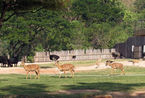 Зоопарк Кхао Кхео антилопы