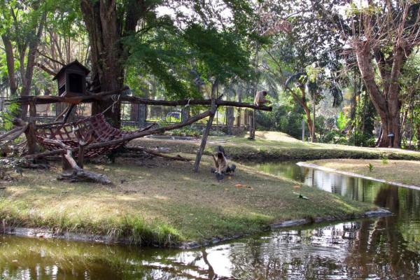 Зоопарк Кхао Кхео остров обезьян