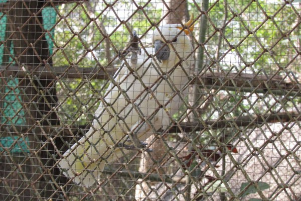 Зоопарк Кхао Кхео попугай