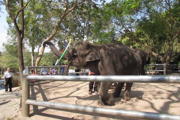 Зоопарк Кхао Кхео слоны