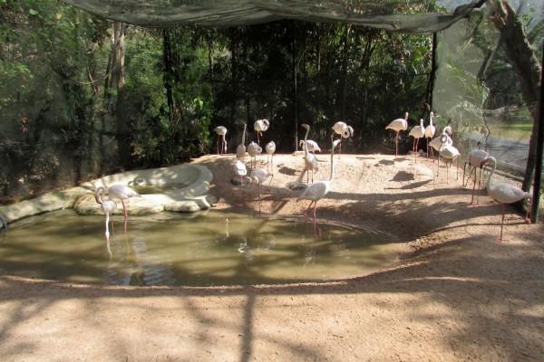 Зоопарк Кхао Кхео фламинго