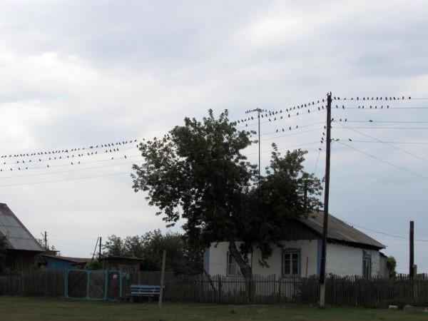 Лето в деревне фото скворцы