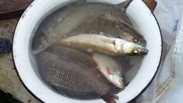 Лето в деревне фото рыба улов