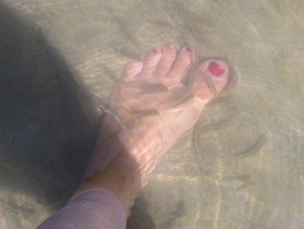 Лето в деревне fish spa