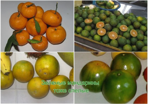 Презентация Разнообразие плодов, 3 класс