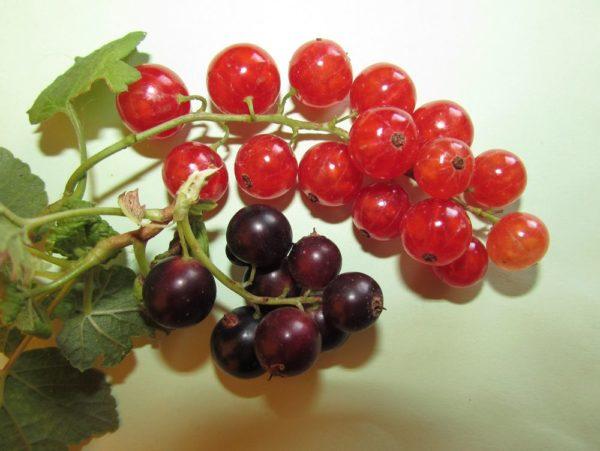 смородина загадки про ягоды