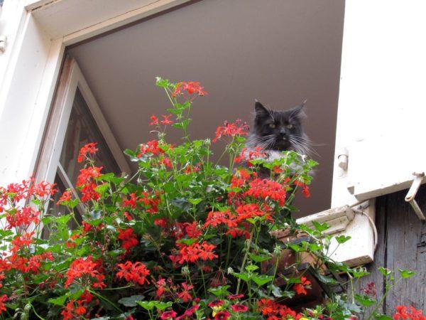 риквир riquewihr кот