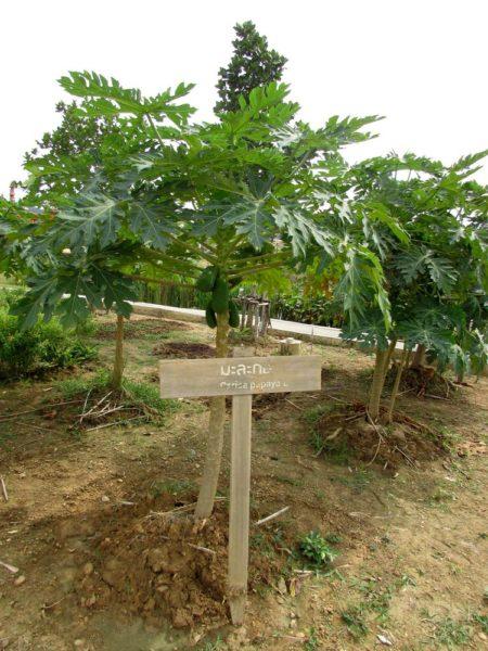 Аквапарк Рамаяна - Ramayana waterpark фруктовый сад на острове