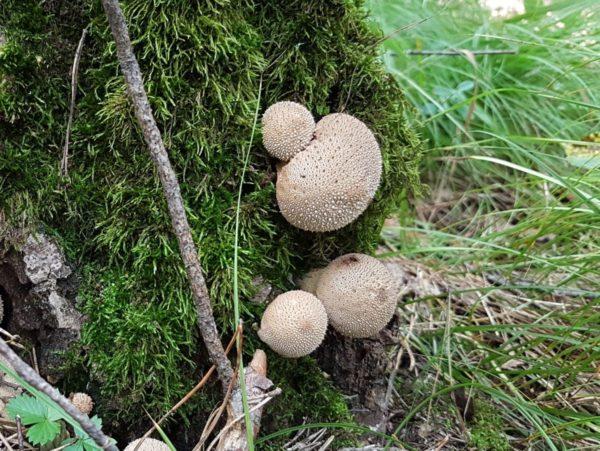 Необычные грибы удивительные грибы