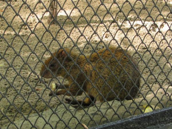 Новосибирский зоопарк, прогулка