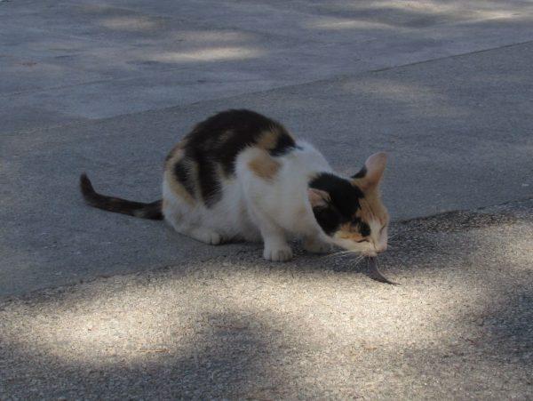 Кошки в Хорватии