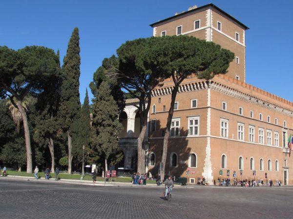 Цветы Италии Пиния, Pinus pinea