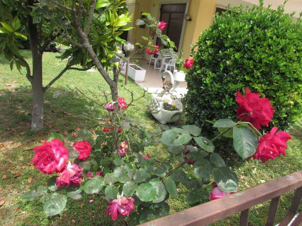 Цветы Италии Розы