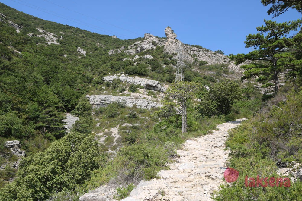 Видова гора на Браче
