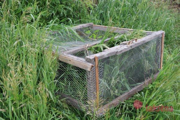 Выращивание гусят с первых дней на даче